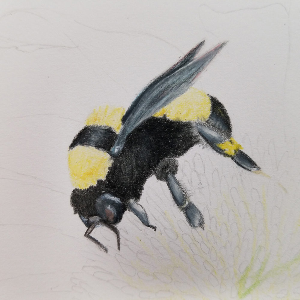 Closeup of the illustrated bee