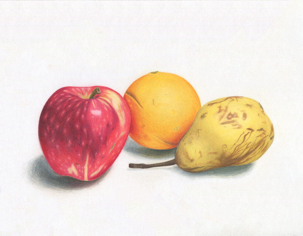Final image of the fruits illustration