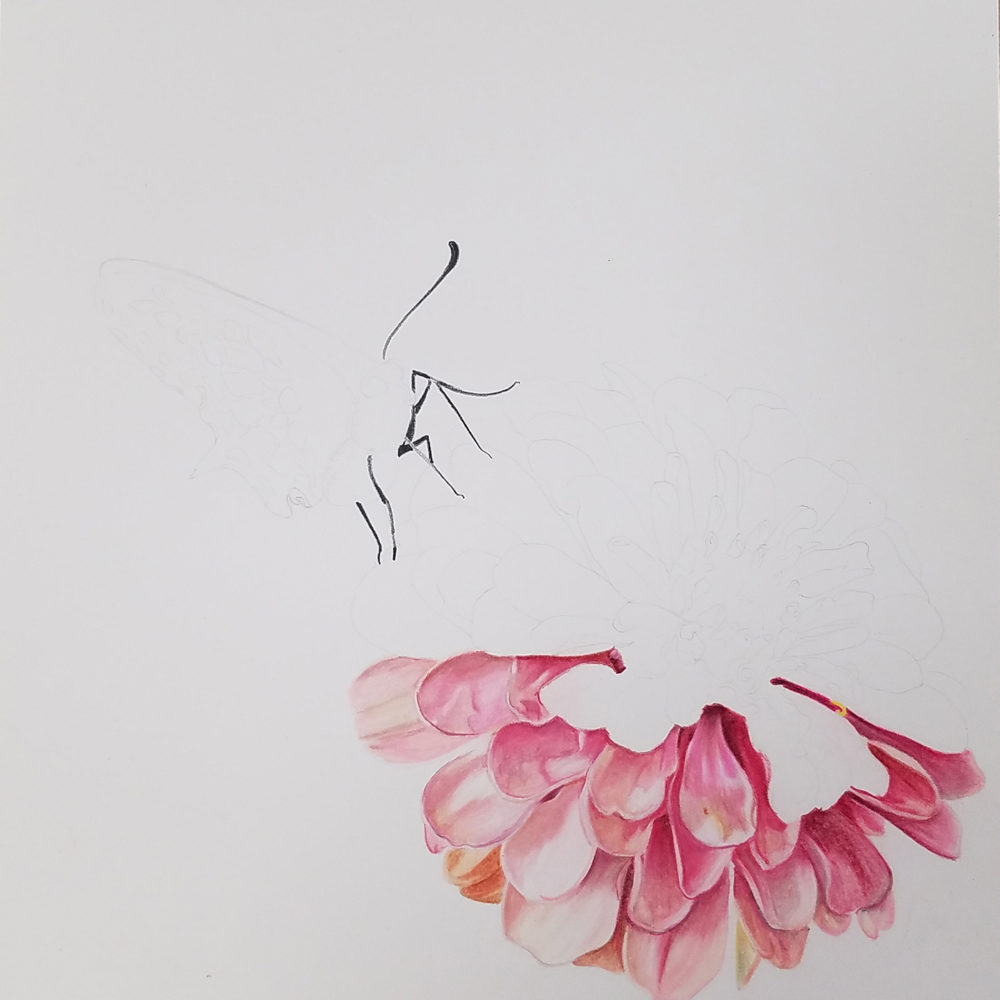 Half of the flower done in the Zinnia illustration