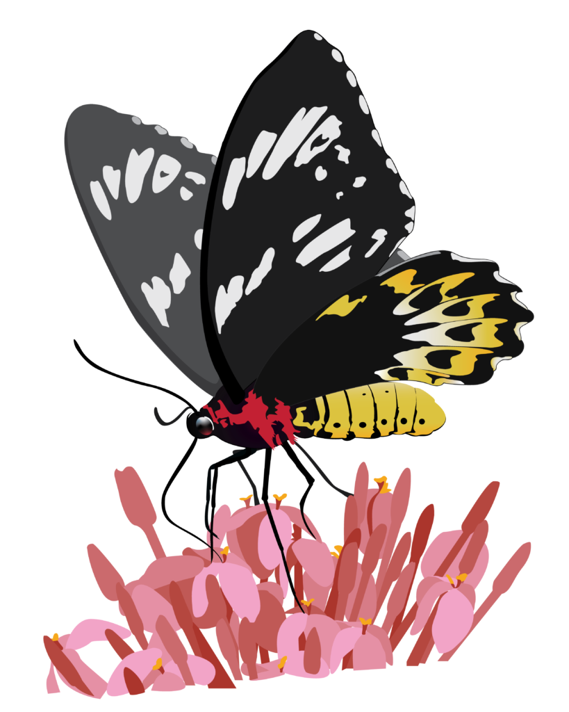 The art on the pollinators poster