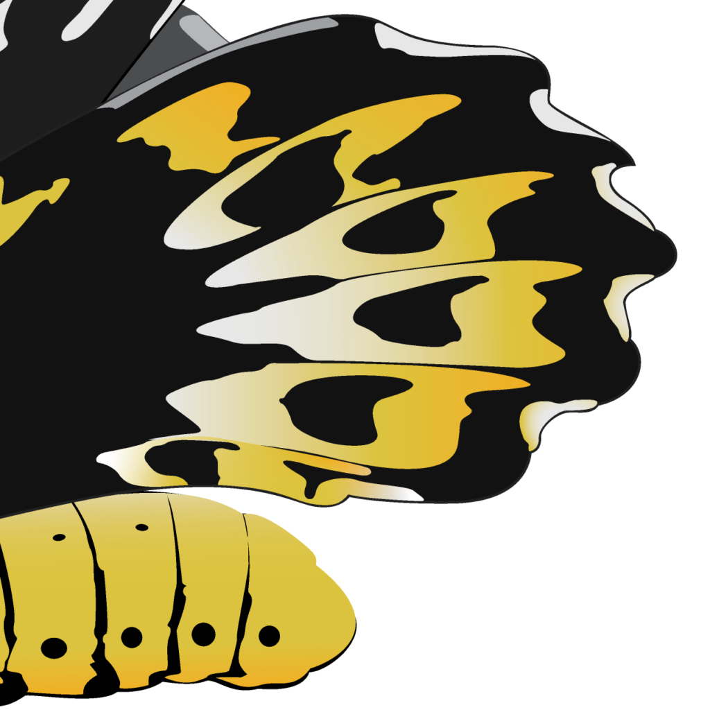 The back section of the butterfly illustration
