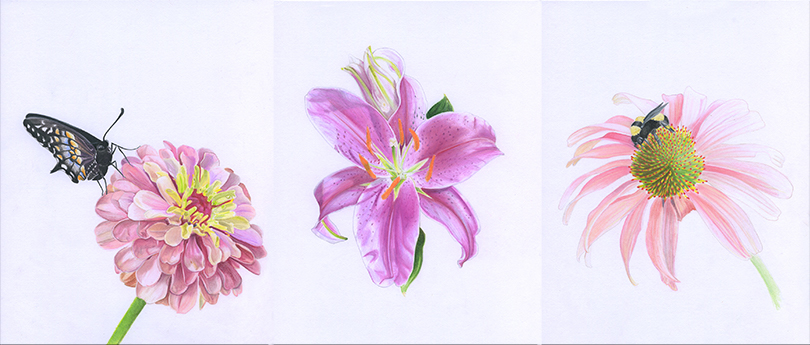 All the flower illustrations in one
